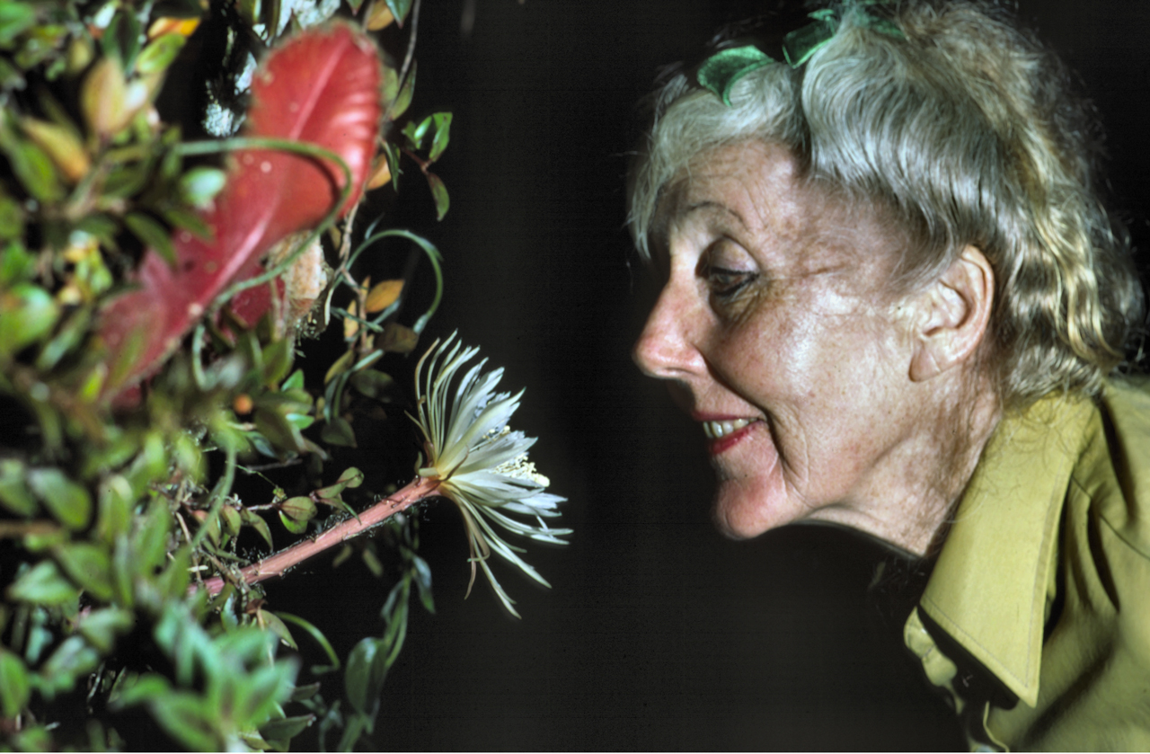 Margaret Mee and the Moonflower